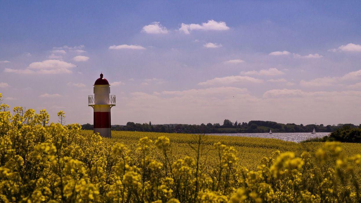 Lighthouse Leuchtturm Leuchtfeuer Rapsfeld Raps RapeFlowers Rapeseed Field Rapeseed Lighthouse_lovers Danmark Flensburger Förde Landscape Landscape_Collection Landscapes With WhiteWall The Great Outdoors - 2016 EyeEm Awards