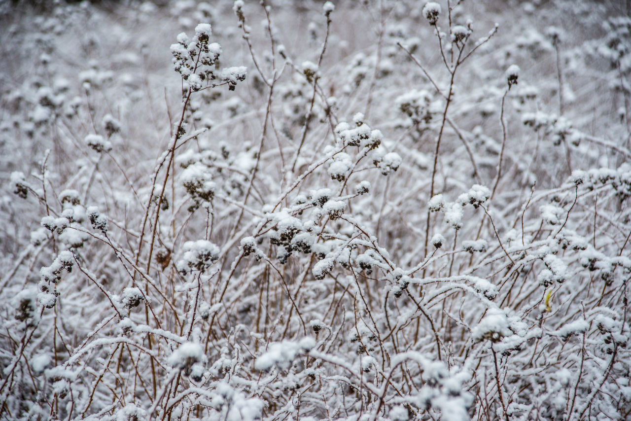 Mon Repos (Vyborg) https://en.wikipedia.org/wiki/Mon_Repos_(Vyborg) Beauty In Nature Close-up Cold Temperature Day Field Frozen Grass Growth Nature No People Outdoors Plant Scenics Snow Tranquility Winter