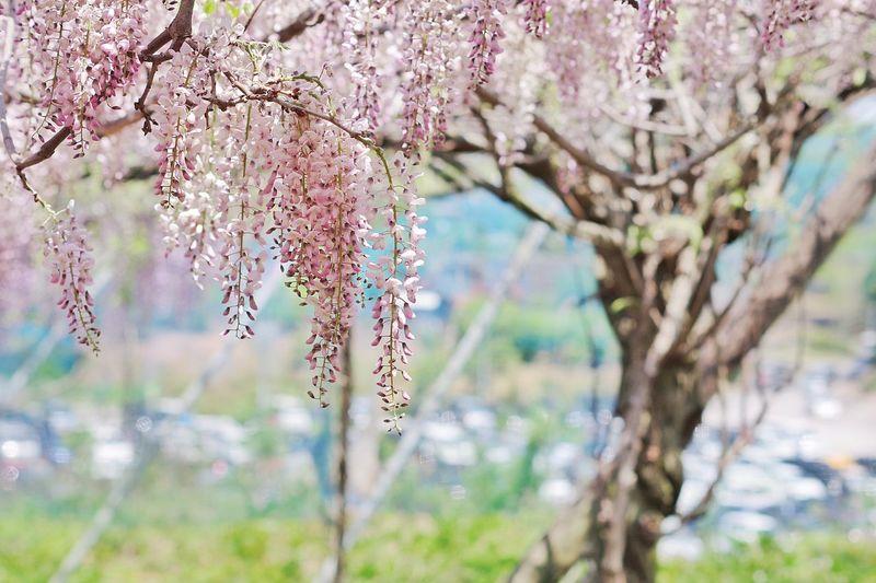 Ooita Flower Fuji Pentax Japan