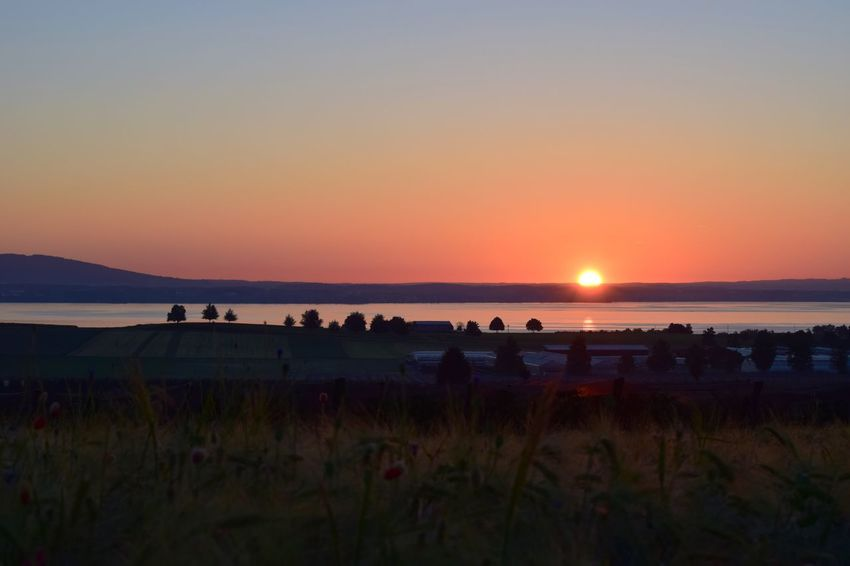 Sunset Nature Beauty In Nature Scenics Sun Tranquil Scene Silhouette Field Landscape Tranquility Sky Plant Grass Outdoors Growth Clear Sky Sea No People Water Day Bodenseebilder Sonnenaufgang Bodensee