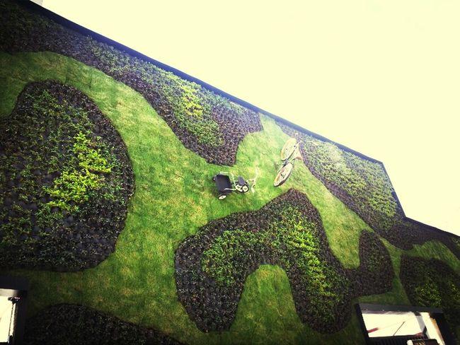 Wall Green
