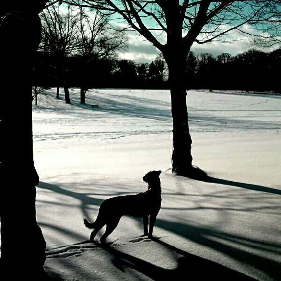 My Smartphone Life Taking Photos Check This Out Winter-time In Germany Dogs Magic Hour Dogwalk