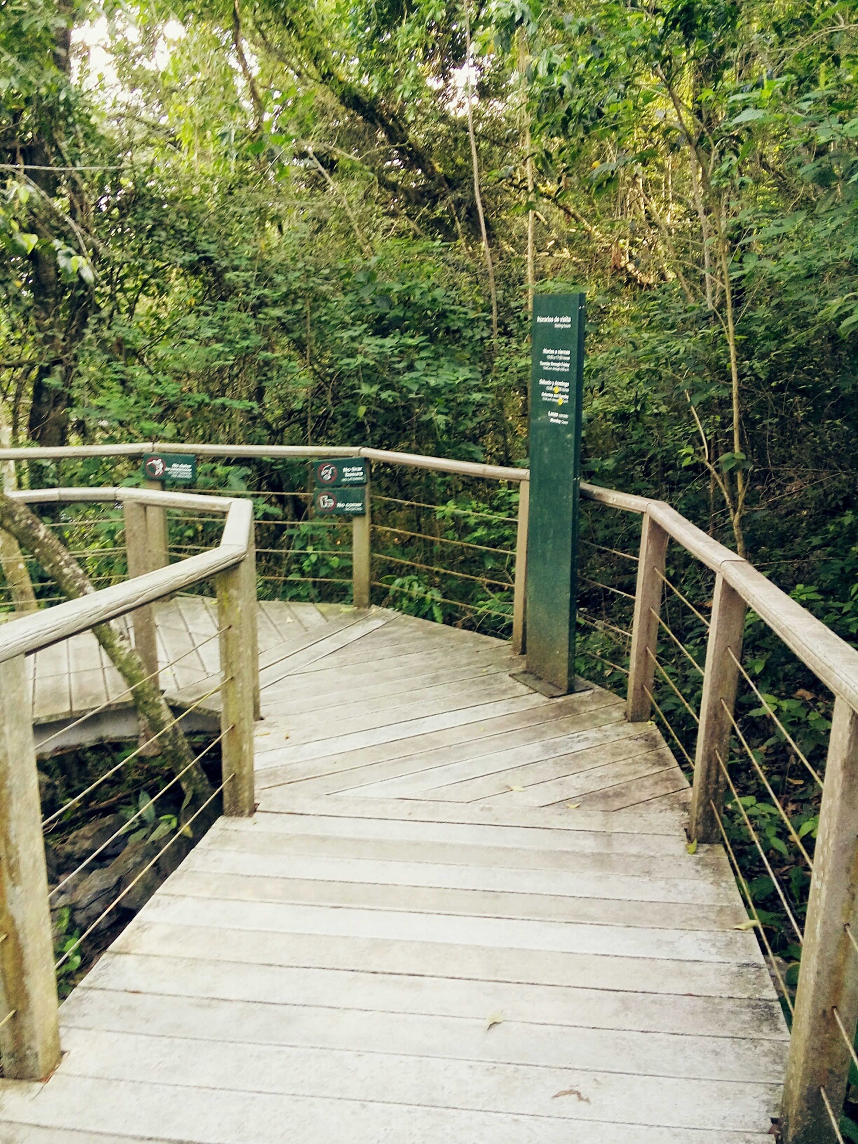 railing, tree, steps, no people, staircase, outdoors, day, steps and staircases, footbridge, the way forward, nature, wheelchair access