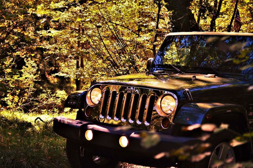 Car Tree Outdoors Driving Jeep Wrangler JK Thats Me! Jeeplife Jeep Life ❤ Autumn Road Sign ThatsMe Forest Mountain Tree Slovenia Nature Adventure EyeEm Selects Slovenia Scapes Road Mountain Range