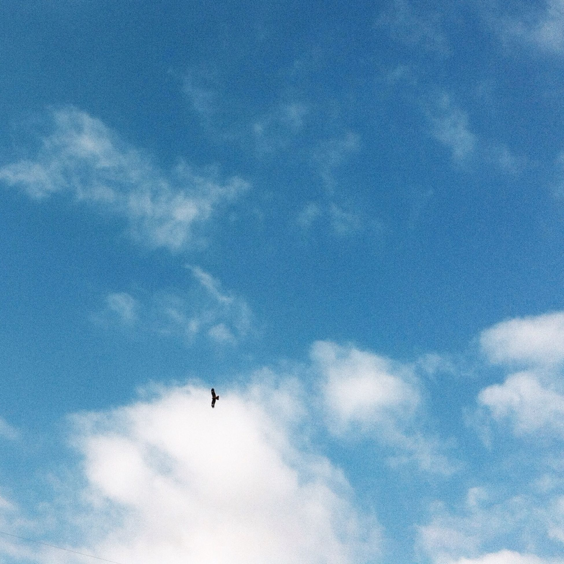 flying, low angle view, animal themes, bird, animals in the wild, sky, wildlife, mid-air, cloud - sky, one animal, blue, spread wings, nature, beauty in nature, cloud, silhouette, cloudy, outdoors, on the move, tranquility