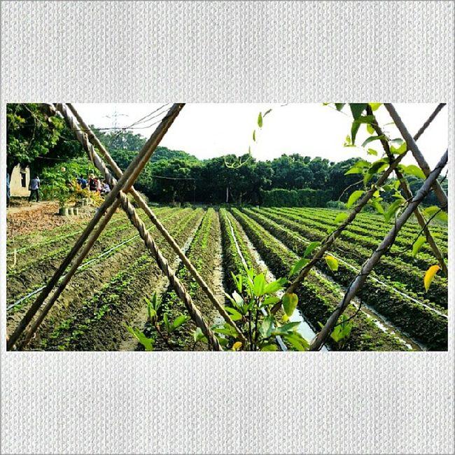 An organic farm after our lovely hike Organicfarm Chooseyourfood Healthy
