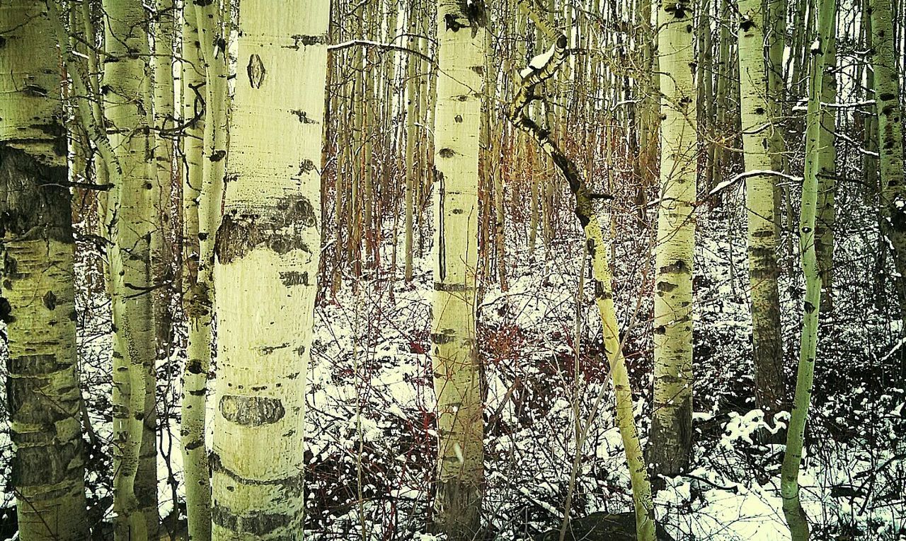 "Ifyougointothewoodstoday.. Eyeemnaturelover ""I know, where you stand, silent in the trees..."" What Are You Listening To?"
