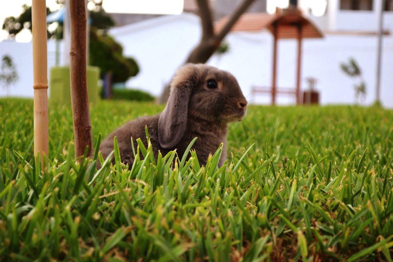 Pets Corner Charly Mybunny Bunny Ears