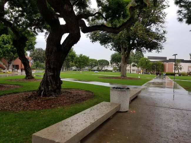 CSULB Aynaphotography California Long Beach Tree Growth Nature No People Outdoors Beauty In Nature Day Sky Rainy Day RainyDay Long Beach California
