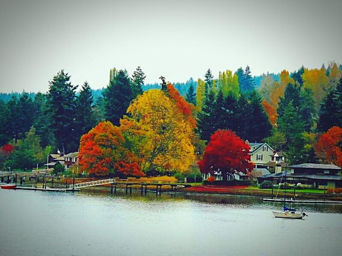 Gig Harbor Autumn Colors