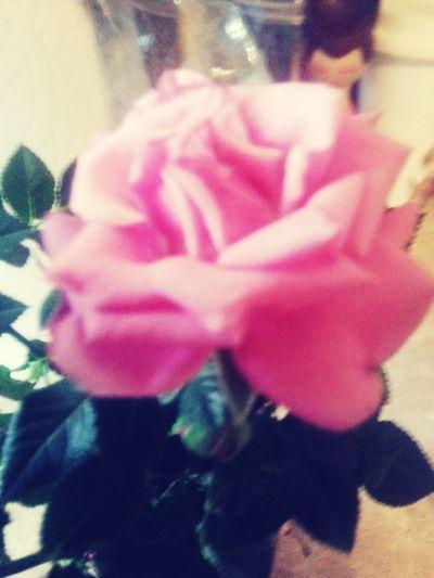 A Beautiful Rose♡♥