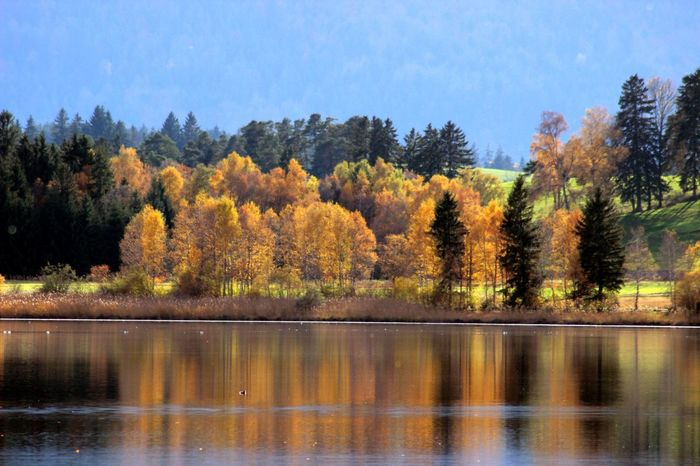 Beauty In Nature Bei Füssen Countryside Hopfen Am See Horizontal Symmetry Lake Outdoors Scenics Standing Water