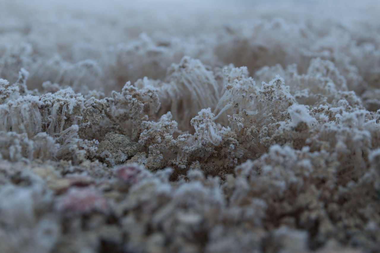 plant like growth around geothermals Beauty In Nature Close-up Cold Temperature Day Geothermal  Geothermal Activity Growth Ice Iceland Nature No People Outdoors Plant Snow Thermals Winter