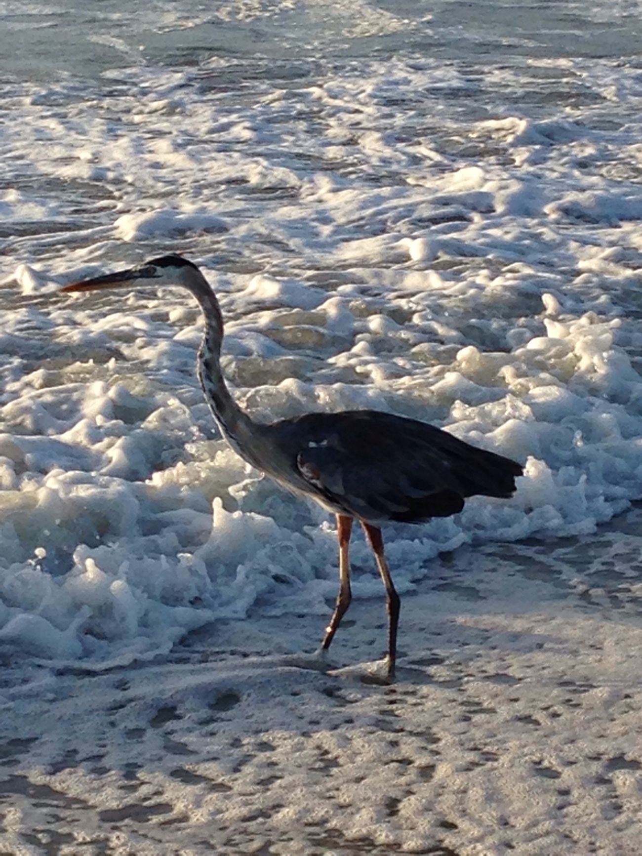 Looking for breakfast Being A Beach Bum Beach Nature Enjoying Life