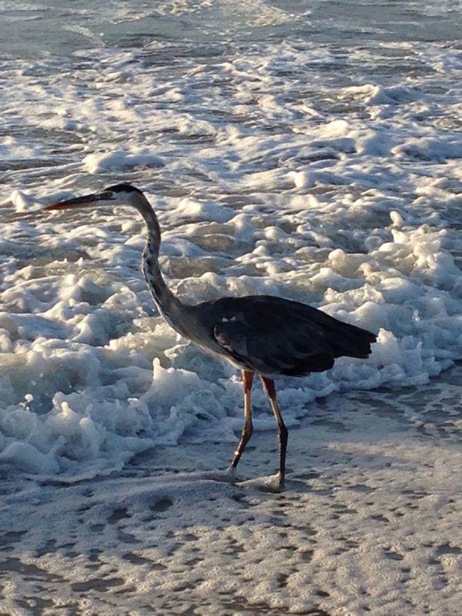 Looking for breakfast Being A Beach Bum Beach Nature Enjoying Life