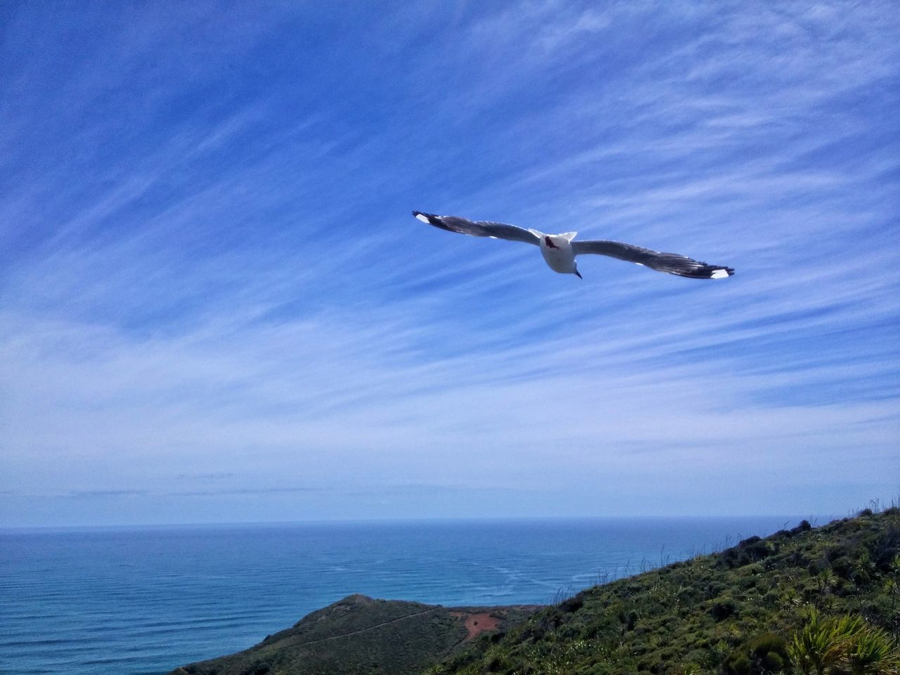 https://youtu.be/343QD5PRB7w 🐚🌴Fly..... Are We There Yet! Motuopao Island Peach Colored Dunes Twilight Beach Te Paki Dunes Te Werahi Beach Horizon Over Water SH 1N Aupouri Peninsula SH1 New Zealand Cape Reinga New Zealand State Highway 1 New Zealand Summer NZ Style Travel Destinations Respect And Enjoy😍 Chillaxing My Country Is Beautiful Unapologetically Cape Maria Van Diemen New Zealand Culture Harakeke Mountain Landscape Flying Betterlandscapes