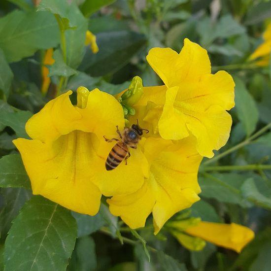 Flower Flowers Floweryellow Beeinflower Yellow Flowers Bees Bee Bee 🐝