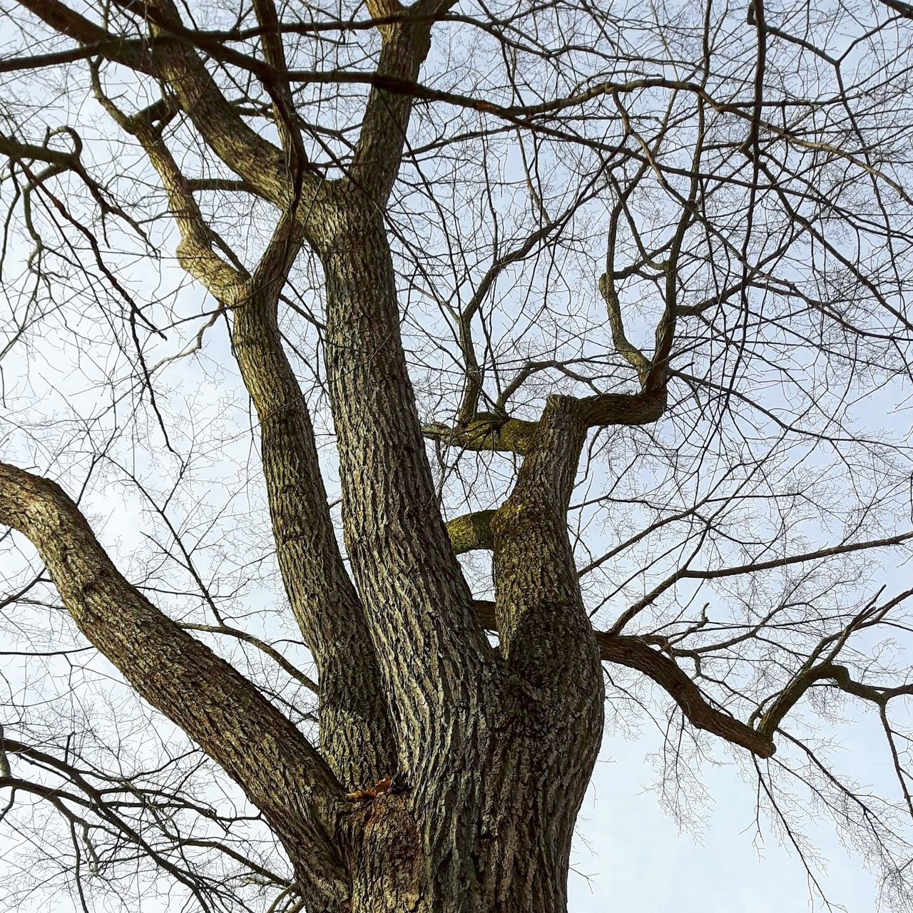 Tree Nature Low Angle View Outdoors ELM Orme Tree_collection  Tree TreePorn Treelovers Winter Hiver