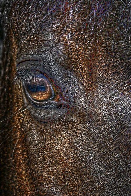Next Chapter. ... - Horses! EyeEm Best Edits Hdr_Collection EyeEm Best Shots - HDR Nature_collection