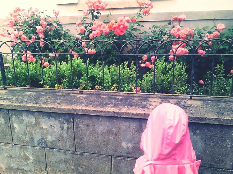 Enjoying Life Pinkitude Roses Flowerpower Garden Photography