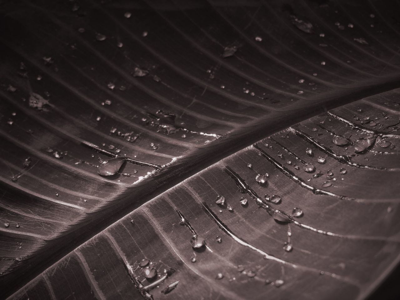 Backgrounds Blackandwhite Close-up Cropped Dark Detail Drops EyeEm Nature Lover Focus On Foreground Full Frame Illuminated Leaf Monochrome Nature Night No People P510 Palm Trees Rain Shootermag Tadaa Community Tadaa Friends Weather Showcase July