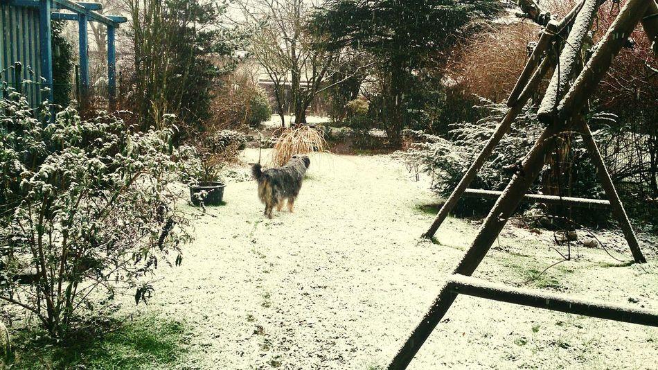 Es hat geschneit Bremen - Woltmershausen