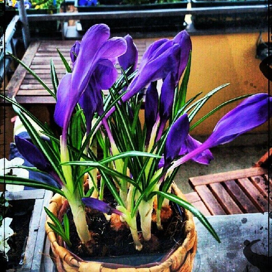 Flowermagic Flower Floral_lover Hdroftheday HDR nature naturepics