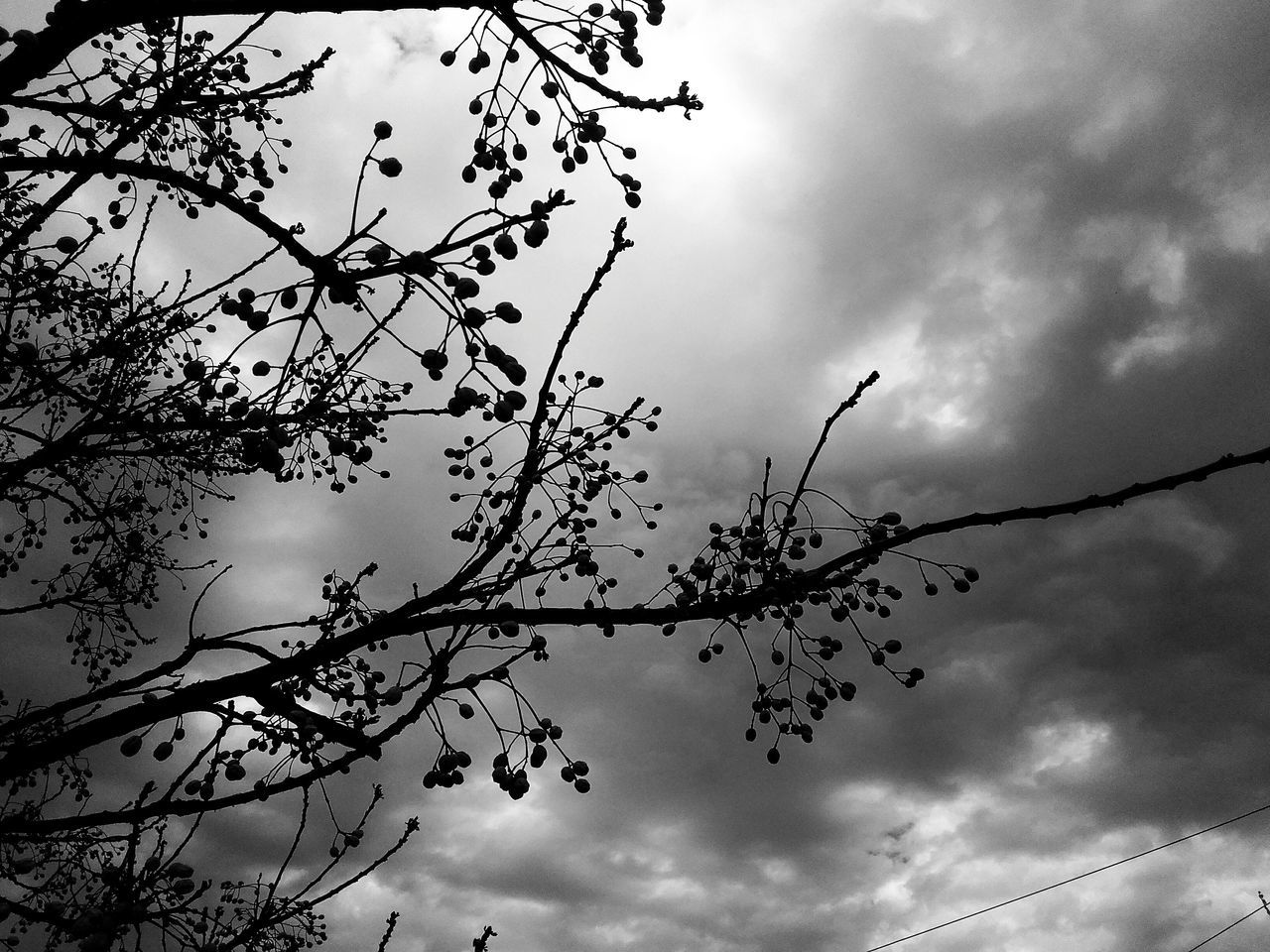 Tree Nature Sky Cloud - Sky Branch Low Angle View No People Beauty In Nature Skydark