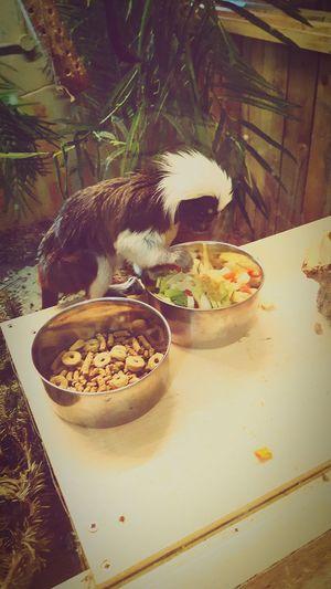 Kirkley Hall Monkeys Fun Day Out Animals