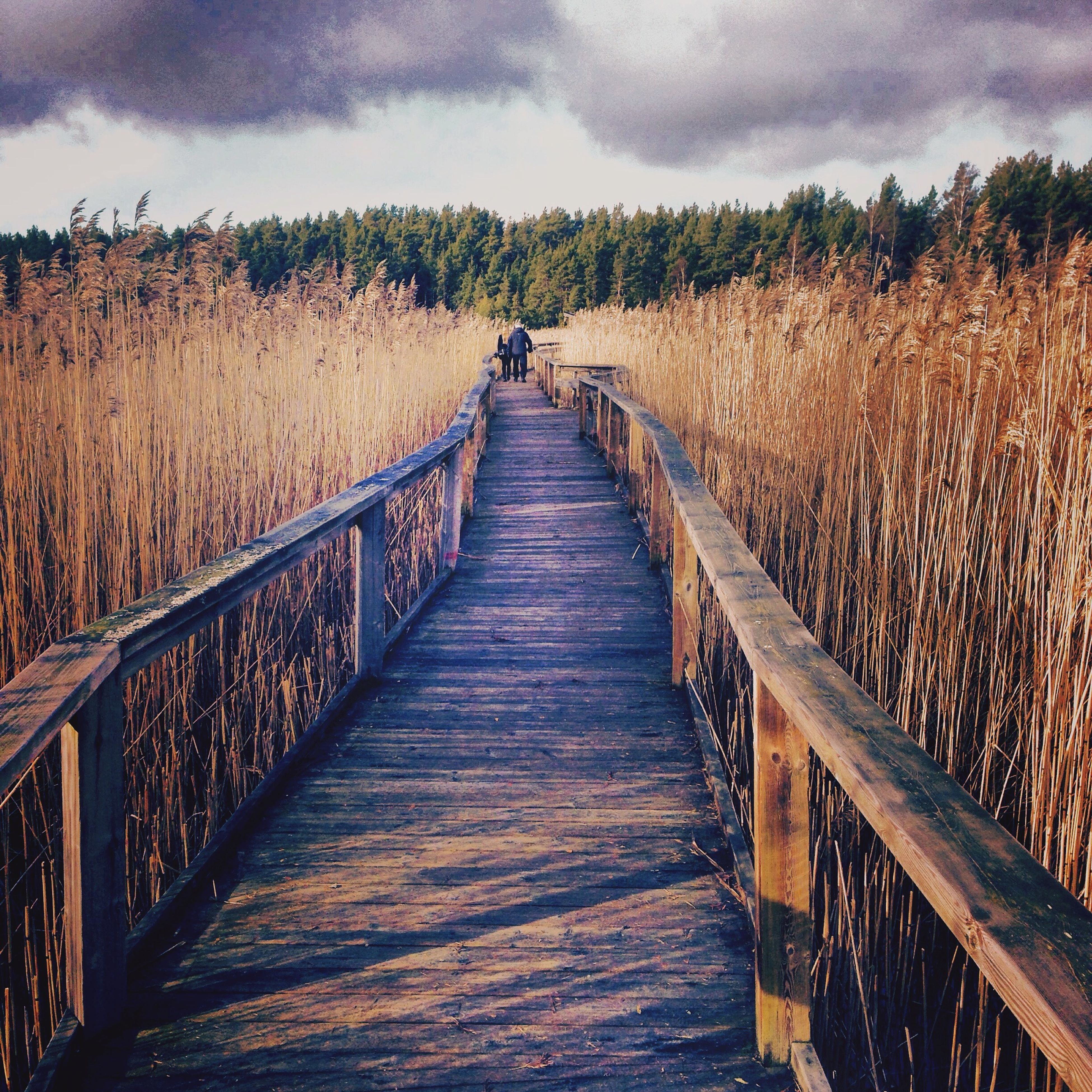 the way forward, railing, sky, tranquility, footbridge, tranquil scene, wood - material, boardwalk, nature, bridge - man made structure, cloud - sky, connection, landscape, tree, diminishing perspective, scenics, plant, beauty in nature, grass, bridge