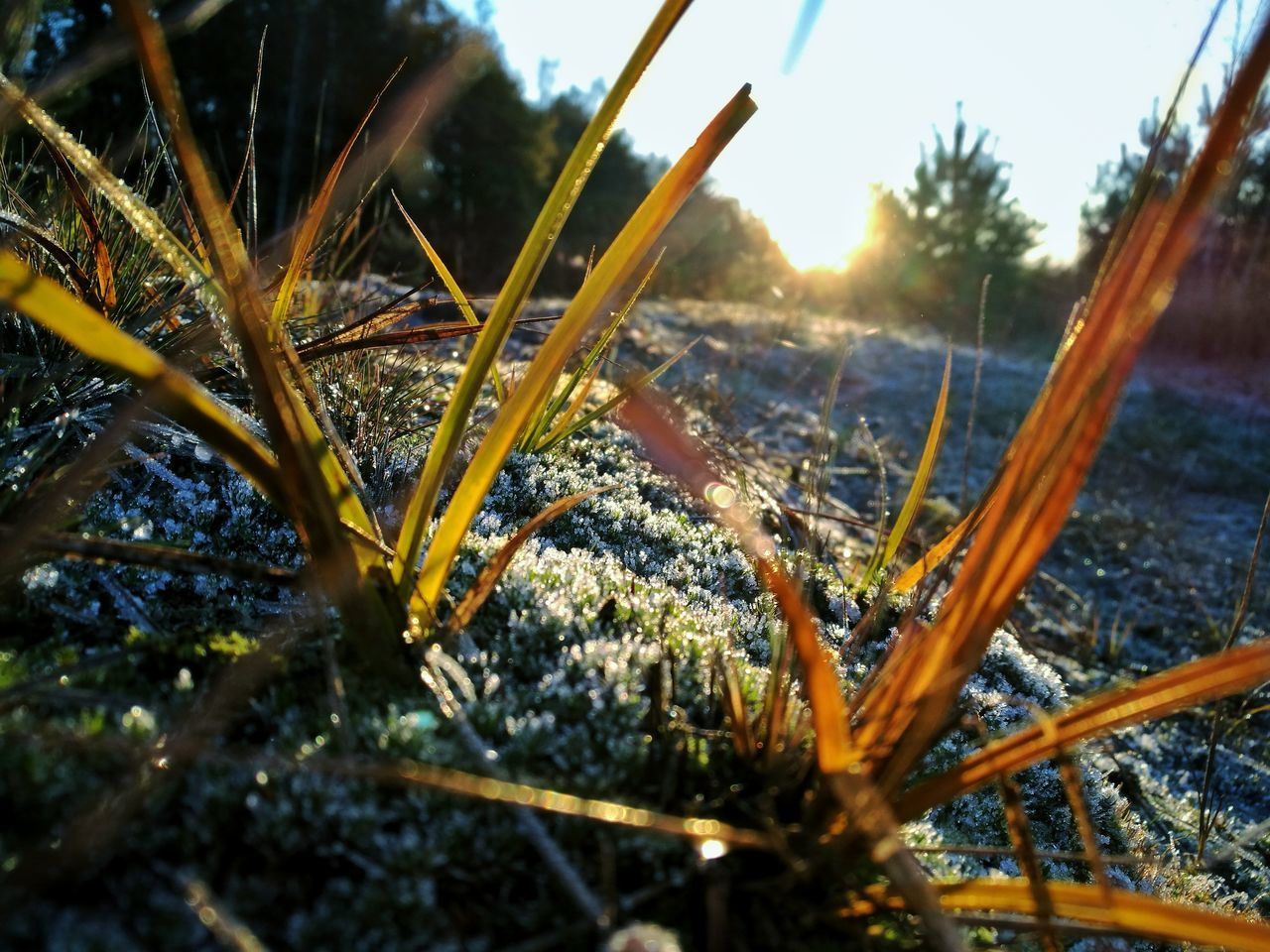 A Mountainbike ride in the Winter. Nature Outdoors Close-up Sky Snow Ice Crystals Sun Sunlight Awake Hope Picoftheday