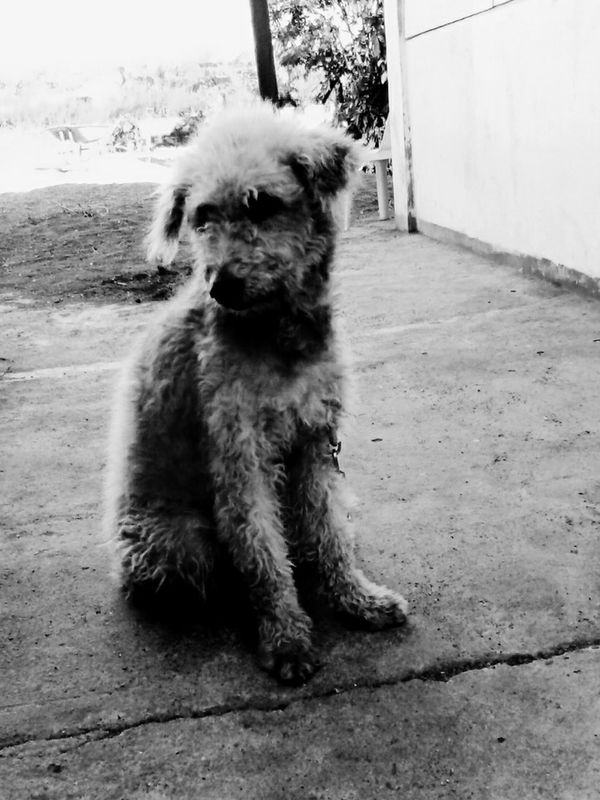 :) ugly,the snobbish dog... Check This Out Taking Photos