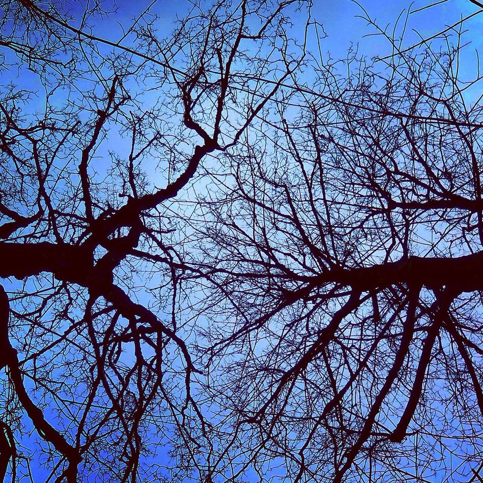 Iran Iran♥ Persian Trees Tree TreePorn Upper Branches Sky Skyporn Sky_collection Gokyuzu First Eyeem Photo EyeEm Best Shots OpenEdit Open Edit Eye4photography  EyeEm Best Edits EyeEm Gallery EyeEm EyeEmBestPics Eyem Best Shots Taking Photos Taking Pictures Taking Photo Take Photos