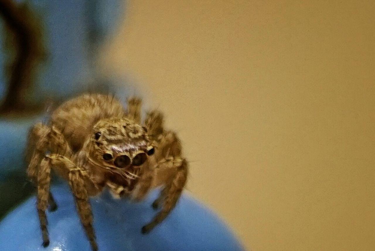 Try something new (crop 100%) Macro Spider Practice Somethingnew