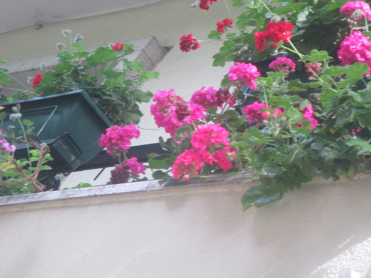 #beauty In Nature #flourishing Plant #flowers On The Balcony #Pink Flowers Balcony Balcony Views Beautiful Flowers Blooming Day Detail From A Balco Feminine  Flourishing Flower Flowers Hanging From The Balcony Fragance Growth Harmony Life Nature No People Plant Romantic Romantic Flowers Scent Spring
