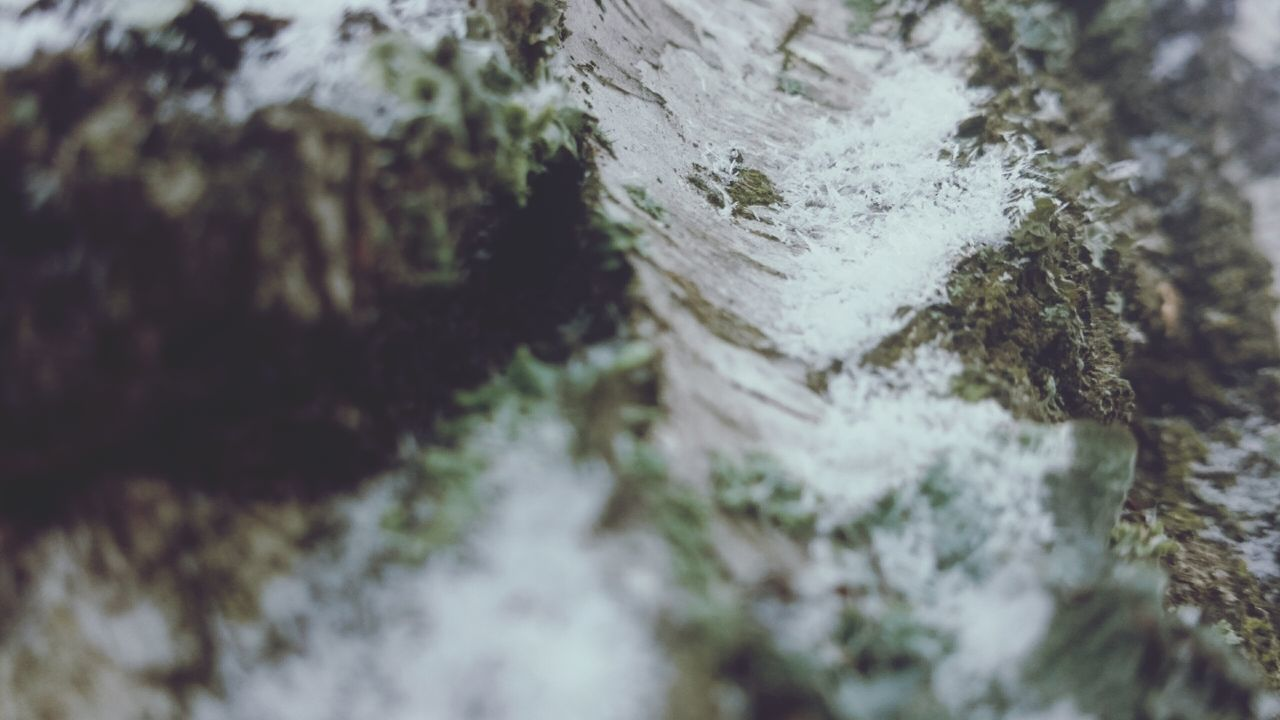 moss, selective focus, nature, rock - object, tree trunk, textured, lichen, no people, day, rough, close-up, outdoors, tree, growth, fungus, beauty in nature