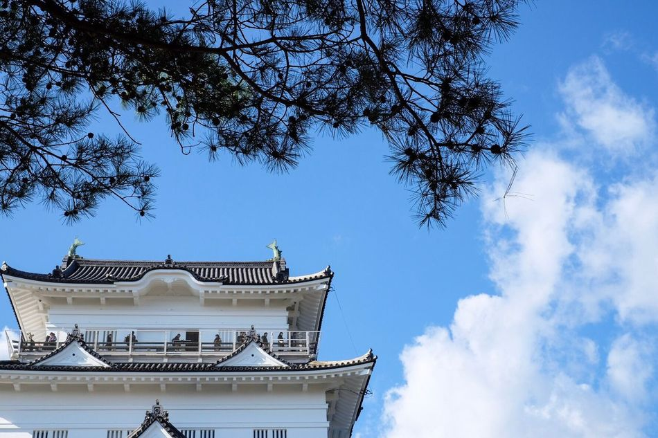 Architecture Building Exterior Tree Built Structure Low Angle View Blue Sky No People Branch Day Clear Sky Outdoors Travel Destinations Japan Castle Odawara