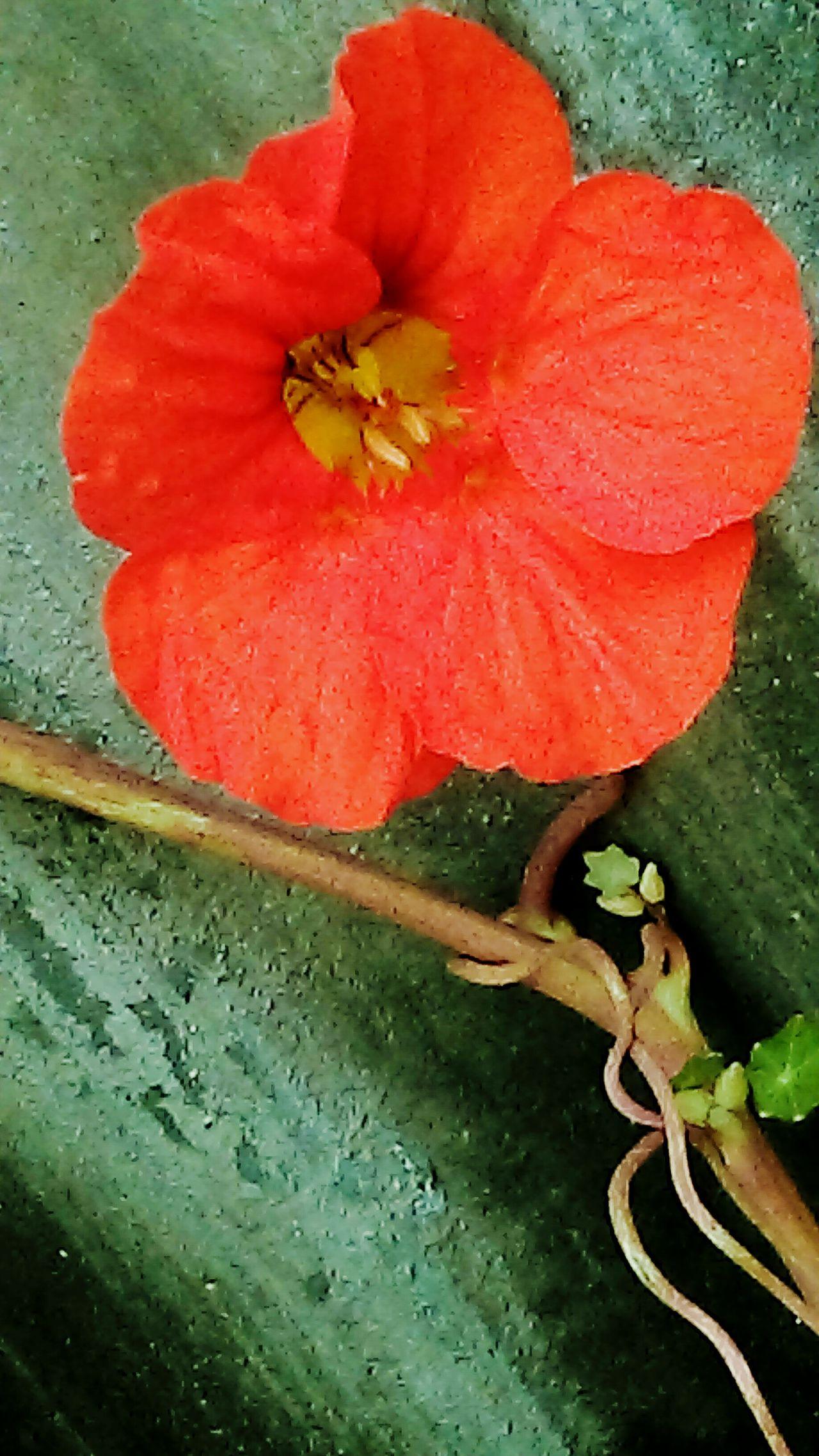 Flower Beauty , Defiance True Delicia Striength Comunity Springtime
