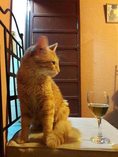 Salotto Shine Red Cat Taking Photos Hello World Enjoying Life Relaxing Hi! Marrakech Morocco Mirleft Life The Week Of Eyeem