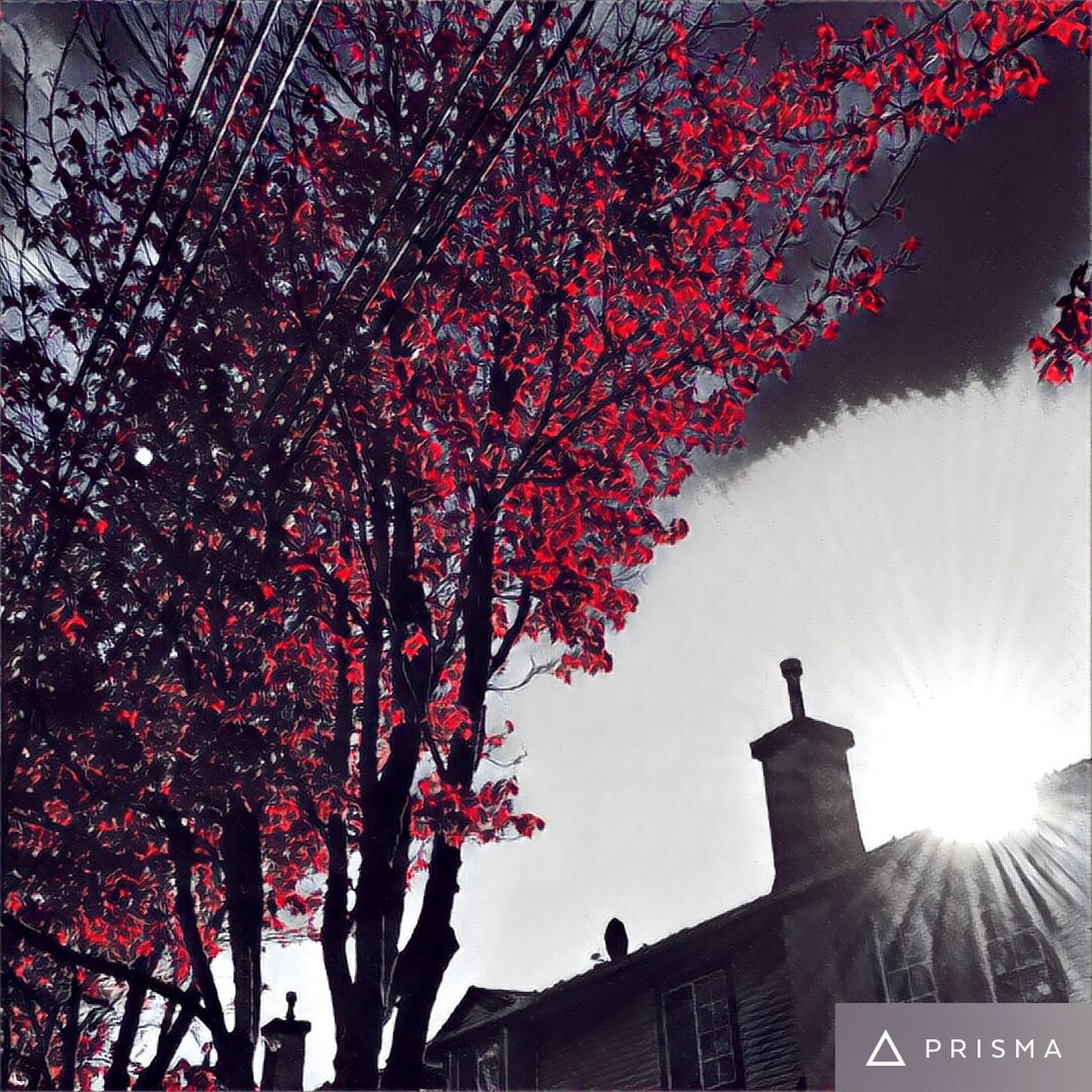 tree, architecture, branch, low angle view, building exterior, blossom, built structure, outdoors, nature, growth, flower, beauty in nature, no people, sky, day, autumn, clear sky, city, fragility, freshness