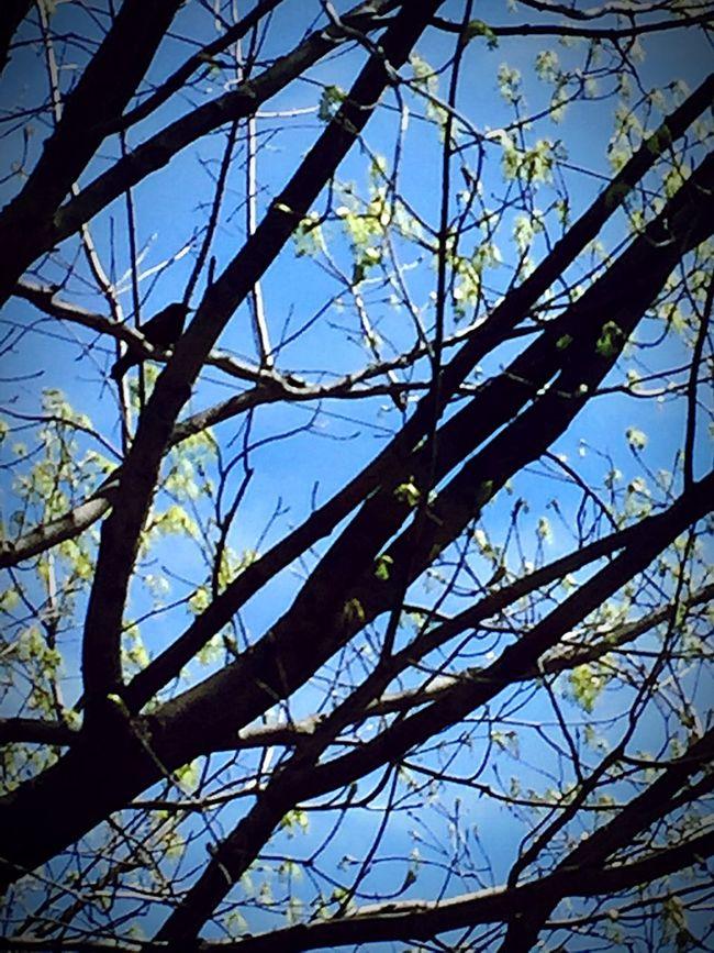 Nature Birdporn Blackbird Orange Wings Beauty In Nature Birds