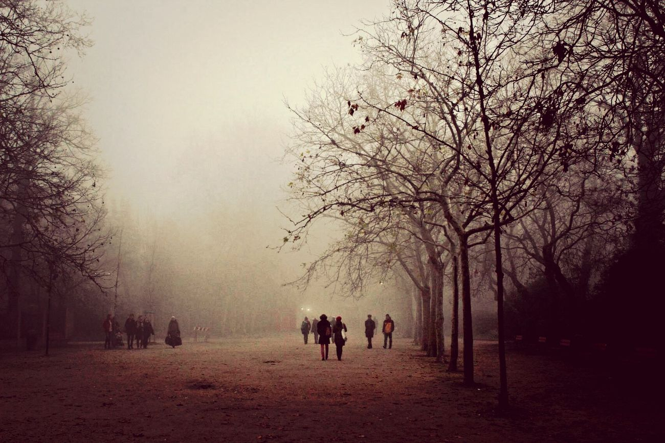 Nebbia Venice Park Dark