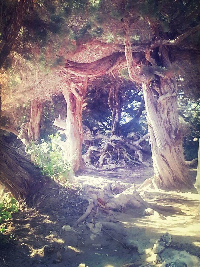 Une arche boisée. A wooden arch.