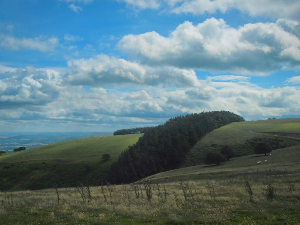 A dark green ribbon. .. Long Mynd Hills Hill Trees Pastures England Landscape Shropshire холмы Vista