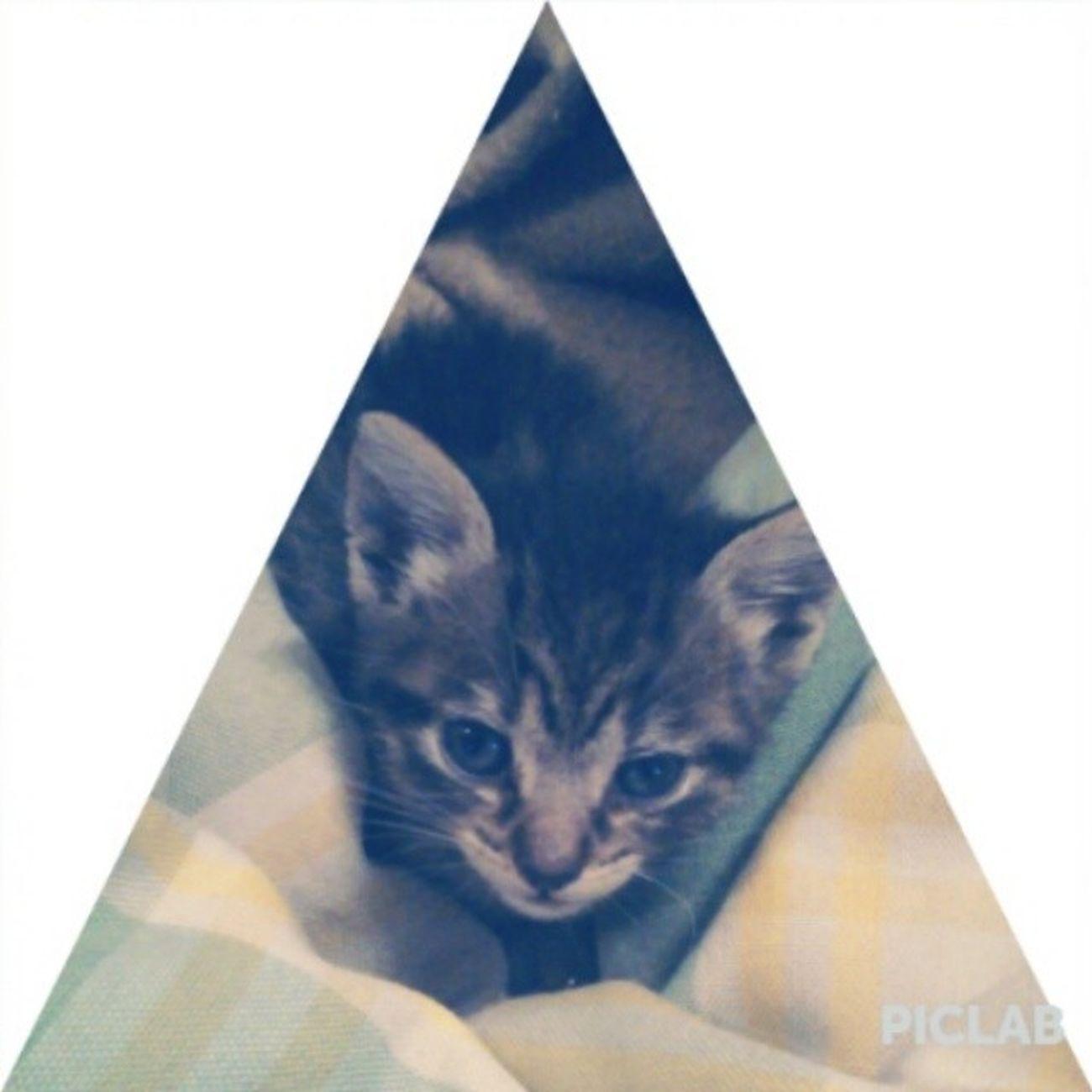 Cat Sweet Bed Bizcochuelo