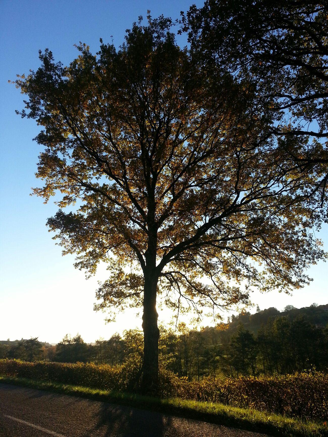 Tree No Filter Enjoying The Sun