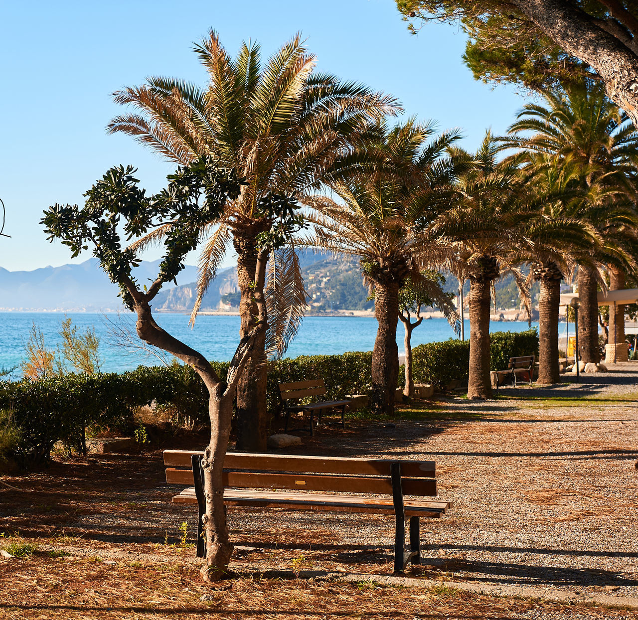 Palm-trees lined seaside of Italian Riviera at winter Bench Blue Sky Coastal Coastline Empty Europe Italian Riviera Italy Landscape Liguria,Italy Ligurian Riviera Mediterranean Sea Nature Nobody Outdoors Palm Trees Park Seashore Seaside Sunny Day Tourist Resort Travel Destinations Walkway Waterfront