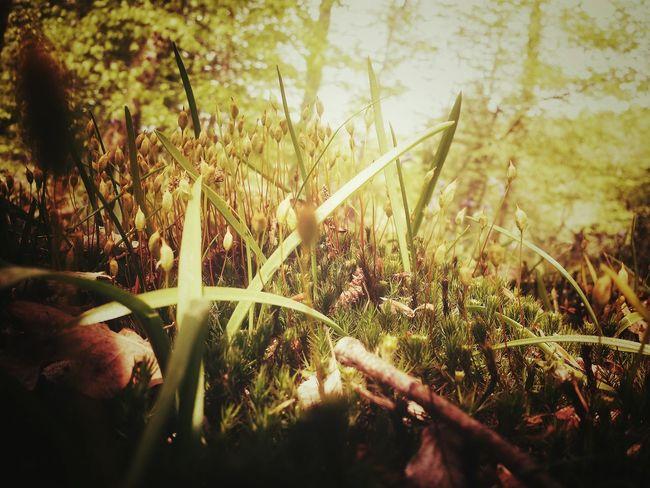 Sous bois Forest Floor
