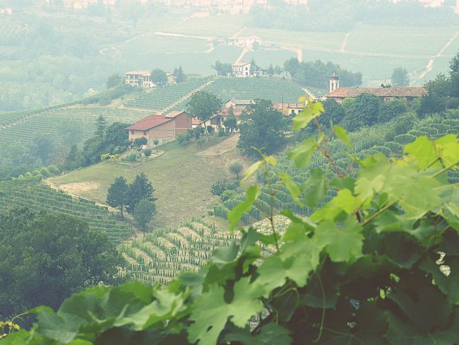 Italy🇮🇹 Barolo Wineyards Wine Tasting Winefield Nature Photography Nature Flowers,Plants & Garden Taking You On My Journey 😎 Details Of My Life Colour Of Life Color Palette Fine Art Photograhy Warm Colors Fine Art Summer ☀