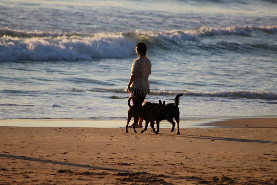 Activity Animals Beach Beauty In Nature Dog Dogs Enjoying The Sun Enjoying The View Light And Shadow Long Goodbye Nature Ocean Outdoors People Person Pets Real People Rear View Sand Sunset Travel Destinations Watching The Sunset Water Wave Women